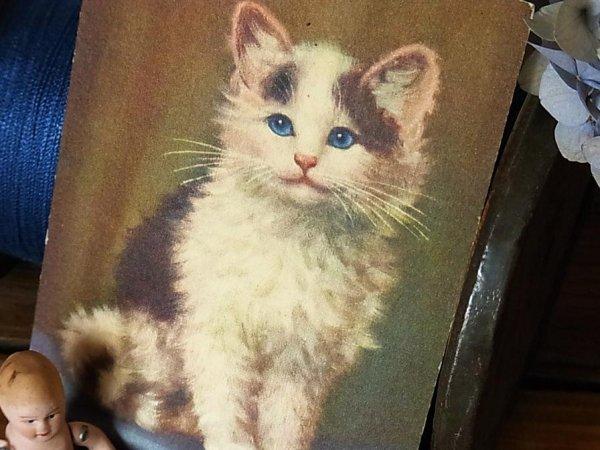 画像1: アンティークポストカード 青い目の子猫